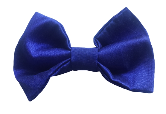 royal-blue baby silk bow tie